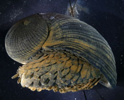 Image: Deep-water snail