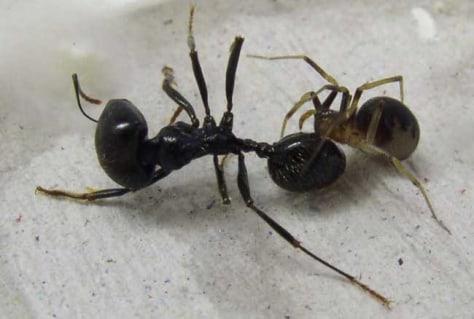 Image: Spider