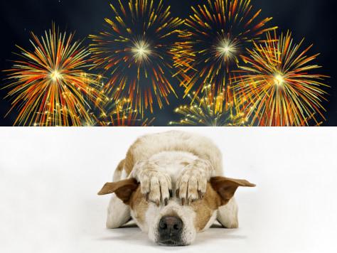 Φοβάται ο σκύλος τα πυροτεχνήματα; Διαβάστε πώς μπορείτε να τον βοηθήσετε...