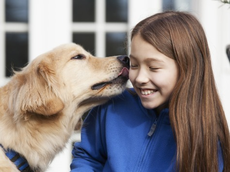 Image: Golden retriever licking girl