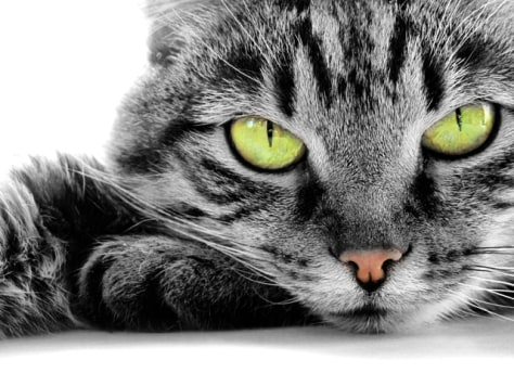 Image: Image: cat