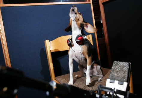 Image: Dog singing