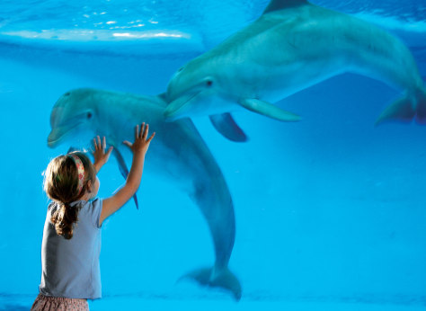 Image: Child and dolphins at The National Aquarium in Baltimore