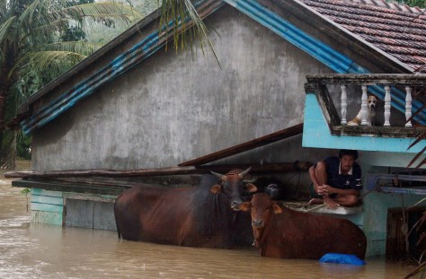Image: Man huddles on ledge with cattle beside him