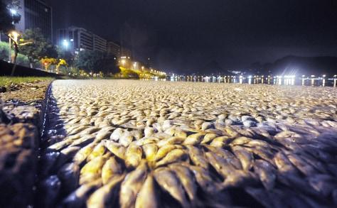 Image: Dead fish