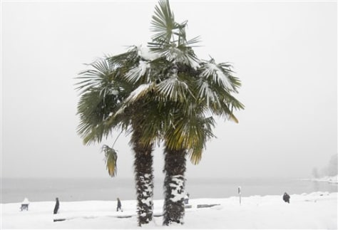 Image: Snow covers palm tree in Vancouver