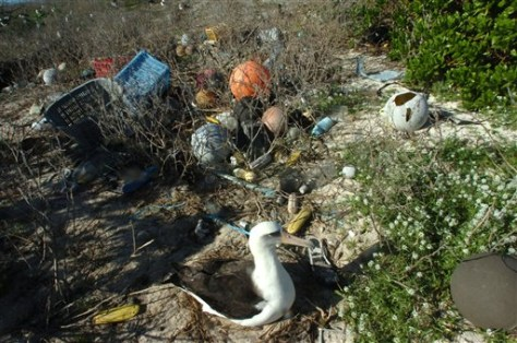 IMAGE: BIRD AND MARINE DEBRIS AT MIDWAY ATOLL