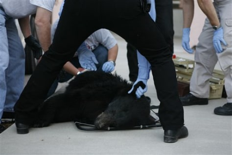 IMAGE: Bear in medical building