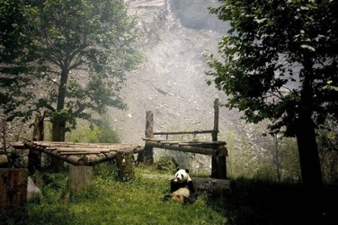 Image: China Panda Reserve
