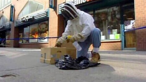 Image: Specialist gathers swarm inside box