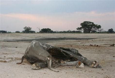 Image: Dead elephant