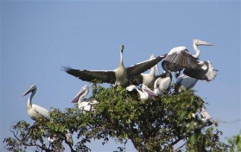 IMAGE: BIRDS IN CAMBODIA RESERVE