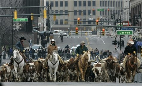 Image: Cattle drive