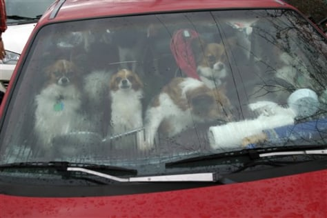 Image: Dogs in a car