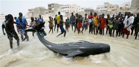IMAGE: STRANDED WHALE