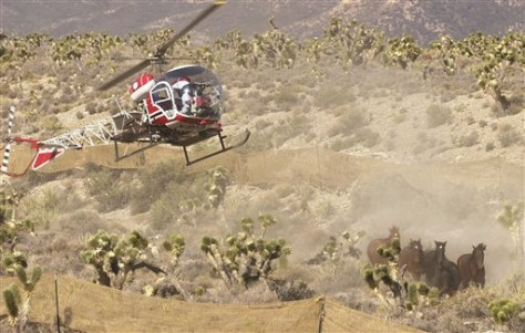 Image: Helicopter used to round up wild horses