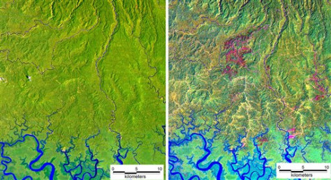 IMAGE: Satellite views of Papua New Guinea logging
