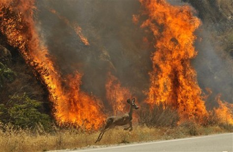 Image: Deer escapes fire