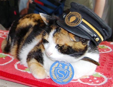IMAGE: Japan's railway cat