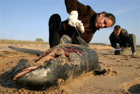 IMAGE: DEAD DOLPHIN