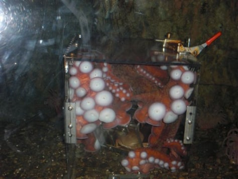 Octopus in a Box