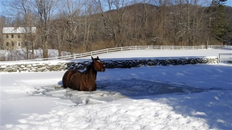 Image: Cold horse