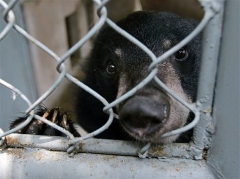IMAGE: BEAR IN HOLDING CAGE