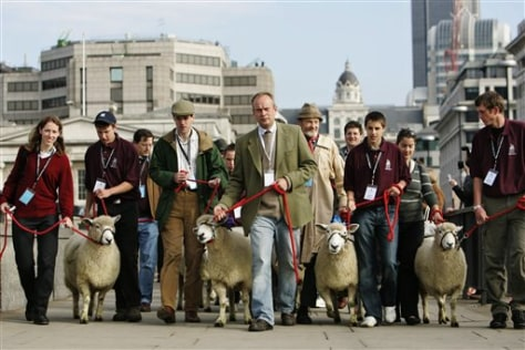 Image: Sheep taken across London Bridge