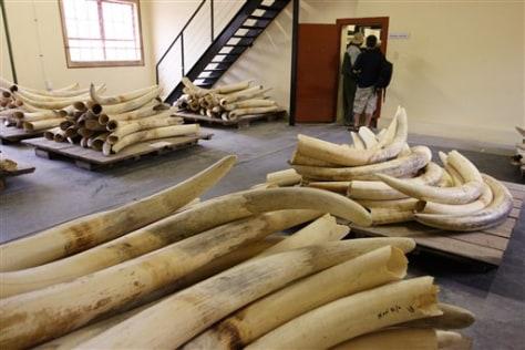 Image: Elephant tusks