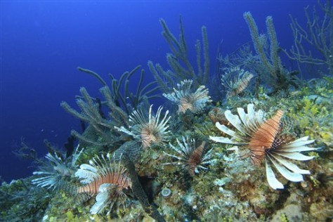 Image: Lionfish off North Carolina