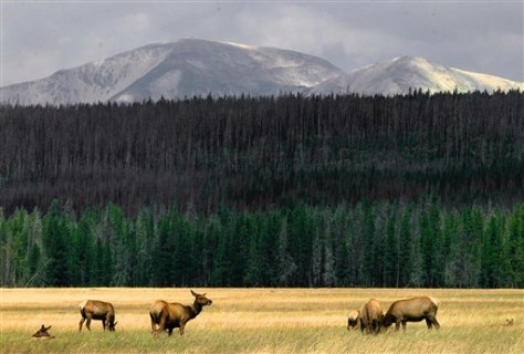 Image: Herd of elk