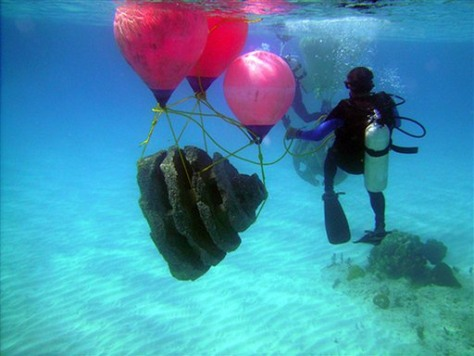 Image: Reef ball is moved to seabed