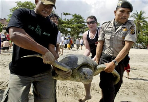 Image: Sea turtle returned to sea
