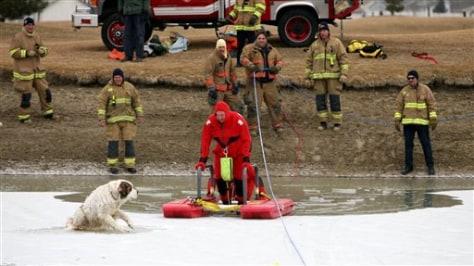 Image: Fireman rescues St. Bernard