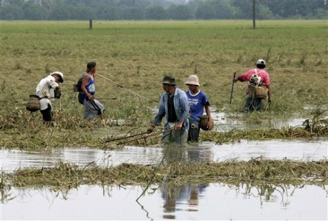 Image: Fishing in rice field