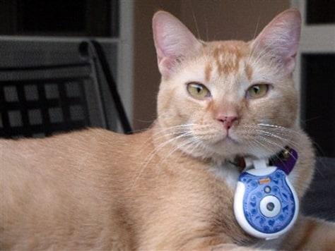 Pets Cat Cams