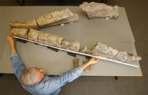 Image: Fossilized pliosaur jaw bone