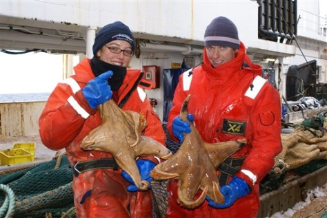 Image: Marine ecologists hold giant starfish
