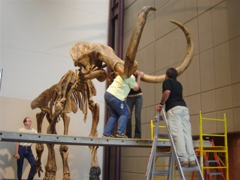 Image: Museum Mammoth
