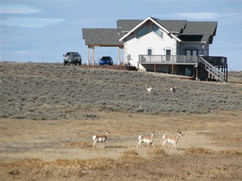 IMAGE: ANTELOPE IN WYOMING