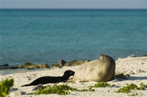 IMAGE: MONK SEAL AND PUP