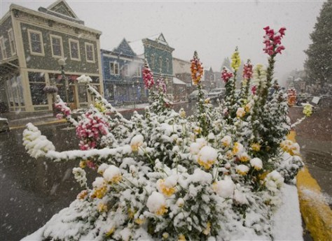 Image: A street flower-box collects fresh snow
