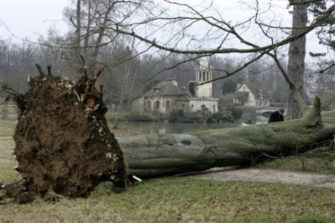 Image: Fallen Versailles tree