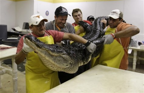 Image: Alligator meat