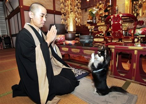 Image: Praying dog