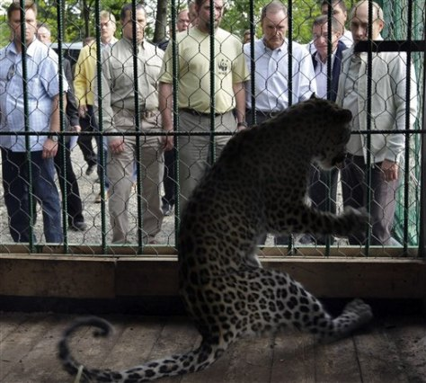 Image: Putin looks at snow leopard