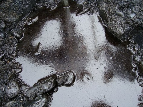 Image: Oil in beach gravel
