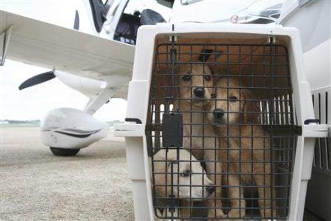 Piloting Pets
