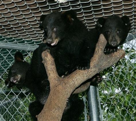 Image: Bear Cub Refuge