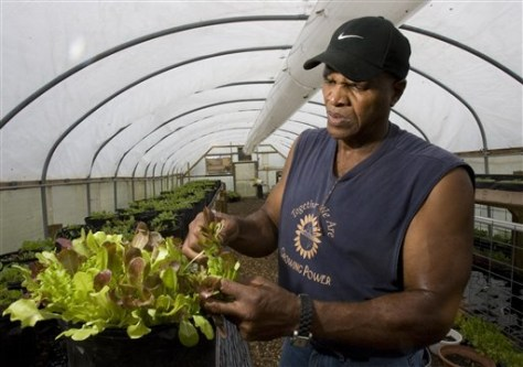 Image: Will Allen looks at some lettuce